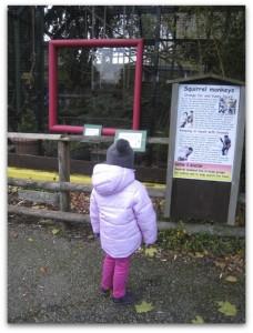 Battersea Park Children's Zoo monkeys