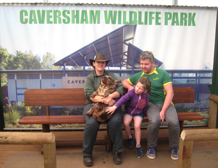 Caversham Wildlife Wombat