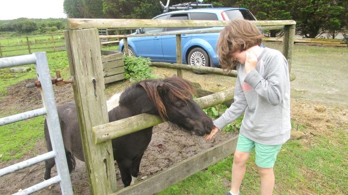 Our summer - Beatnik at Hallagenna Cottages