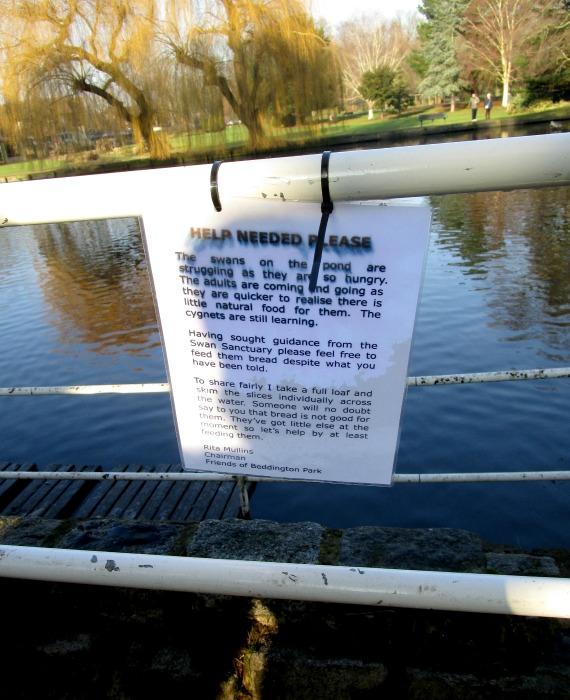 Beddington Park swans notice 2017